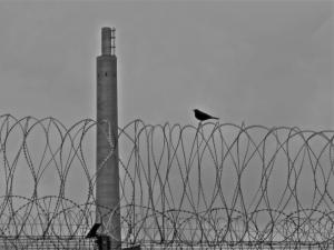 Bird on a Wire - Sellafield