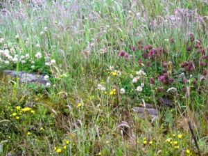 Keekle Head - wild flowers and grasses