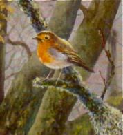 Just a Robin