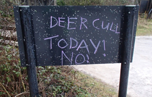 Deer Cull Today! No!