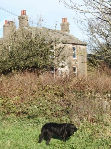 Derelict and owned by the NDA - Sellafield Tarn Cottage?