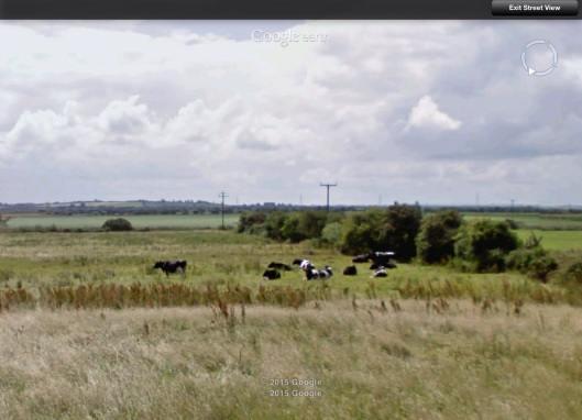 dairy cows area of Steart UK