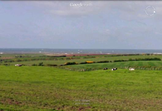 Moorside Cows on the Irish Sea